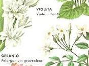 Aceites esenciales: alma plantas