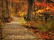 Bienvenido otoño 2015