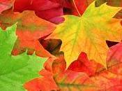 otoño llegó recomendaciones