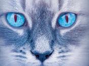 gatos guerreros Claro luna
