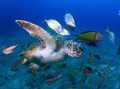 Científicos descubren primer reptil fluorescente mundo