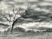 árbol encuentro
