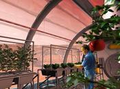 ¿Podrían granjeros espaciales cultivar cereales otros planetas?