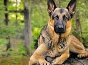 mejores razas perros guardianes
