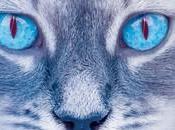 gatos guerreros nueva profecía Claro Luna ERIN HUNTER