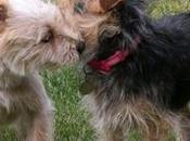 apareamiento perros Importancia, condiciones recomendaciones