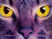Reseña Gatos Guerreros nueva profecía): MEDIANOCHE