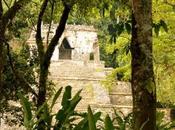 Palenque, medio Selva Chiapateca