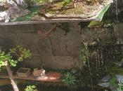 estanque entre bonsais