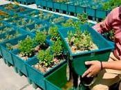 Negocios Verdes como opción negocio rentable