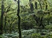 Parque Nacional Baritú, donde naturaleza virgen regocija ejemplares únicos.