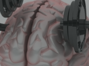 Teoría Aprendizaje: Neuroplasticidad
