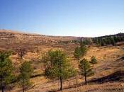 último incendio Sierra Norte…
