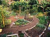 ¿Qué Permacultura? (plantas salvajes plantas comestibles)