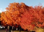 Colores otoño Minnesota