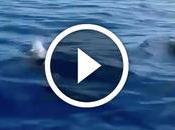 """Delfines """"guiando"""" balseros cubanos"""