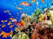 Viaje arrecifes coral