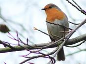 Garden Birdwatch (Enero 2015)