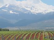 Bodegas Muñana, vinos calidad Granada