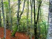 bosque Peloño