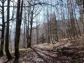 Selva Irati
