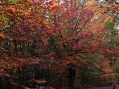 Senderismo Ponga: Bosque Peloño desde Majada Bedules