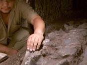 Paleontólogos determinan dinosaurios fueron asesinados alguien confianza