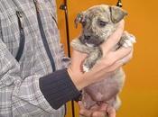 Berna, cachorrita adopción. (Murcia)