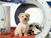 Samsung Dream Doghouse caseta inteligente para perro