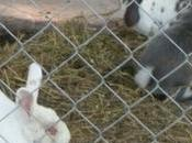 abandono animales Parque Tangamanga