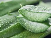 Algunos hechos sobre alérgicos Aloe Vera