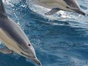 Cove, documental ganador Óscar denuncia caza delfines Taiji, Japón
