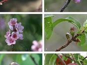 Polinización, fecundación cuajado fruto árboles frutales