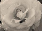 abeja flor…