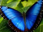 Mitología indios norteamericanos: persiguiendo mariposas.