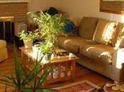 Plantas interior pueden peligrosas
