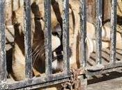 zoológico triste mundo