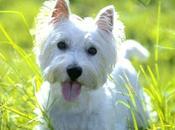Razas perros sueltan pelo