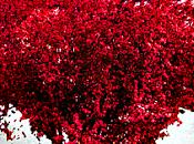 "FEBRERO: ""Mes amor"""