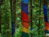 Excelencia tratamiento cáncer: cuando árboles dejan bosque…