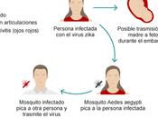 Medicina salud: Zika.