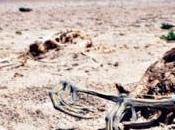 Desastre ambiental Sequía fuentes agua