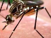 Luis Potosí toma primeras acciones contra virus Zika