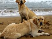 Casas rurales Asturias admiten perros