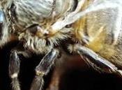 Mortalidad masiva abejas mundo Mass mortality bees world
