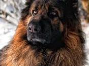 Consejos caninos 'Feb 2016'
