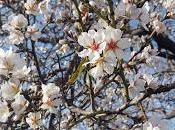 esta primavera, ¿qué? Tonos tendencias 2016 INFO CONCURSO