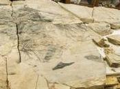 Investigadores UASLP exhibirán fósil jurásico