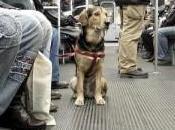 perros podrán viajar Metro Madrid