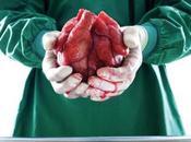 Contrabandista órganos